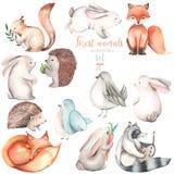 Coleção, grupo de ilustrações bonitos dos animais da floresta da aquarela Fotografia de Stock