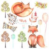 Coleção, grupo de raposas bonitos da aquarela e elementos da floresta Imagens de Stock Royalty Free