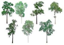 Coleção isolada das árvores fotografia de stock