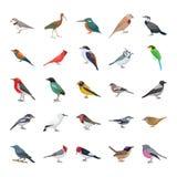 Coleção lisa dos ícones do vetor dos pássaros ilustração royalty free