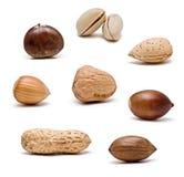 Coleção Nuts. Fotografia de Stock Royalty Free