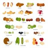 Coleção Nuts Foto de Stock Royalty Free
