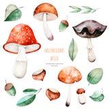 Coleção olorful do outono do  de Ñ com 15 elementos da aquarela ilustração stock