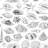 A coleção original do museu do teste padrão sem emenda do mar descasca a espécie em vias de extinção rara, murex do pente do Vênu ilustração do vetor