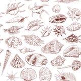 A coleção original do museu do teste padrão sem emenda do mar descasca a espécie em vias de extinção rara, núcleo do murex do pen ilustração royalty free