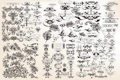A coleção ou o grupo de vintage do vetor florescem para o projeto na formiga ilustração royalty free