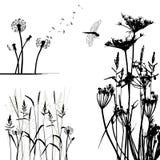 Coleção para desenhistas, vetor da planta selvagem Fotografia de Stock