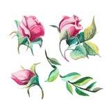 Coleção romântica das rosas diferentes da aquarela Foto de Stock Royalty Free