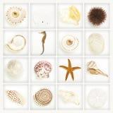 Coleção, seashells no branco Imagens de Stock Royalty Free