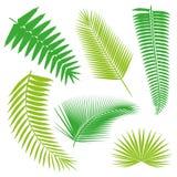 Coleção tropical das folhas de palmeira, vetor do isolado jogo Foto de Stock