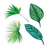 Coleção tropical das folhas, vetor do isolado jogo Fotografia de Stock Royalty Free