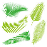 Coleção tropical das folhas, vetor do isolado jogo Imagens de Stock Royalty Free