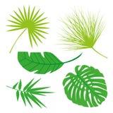 Coleção tropical das folhas, vetor do isolado jogo Imagem de Stock