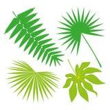 Coleção tropical das folhas, vetor do isolado jogo Fotos de Stock
