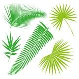 Coleção tropical das folhas, vetor do isolado jogo Fotografia de Stock
