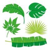 Coleção tropical das folhas, vetor do isolado jogo Imagens de Stock
