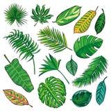 Coleção tropical das folhas, vetor do isolado Jogo grande Fotografia de Stock