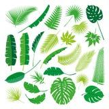 Coleção tropical das folhas, vetor do isolado Jogo grande Fotos de Stock Royalty Free
