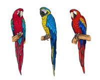 Coleção tropical dos papagaios das aros foto de stock royalty free