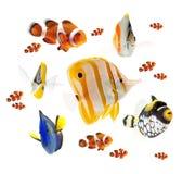 Coleção tropical dos peixes do recife do verão isolada no fundo branco Fotografia de Stock Royalty Free