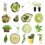 Coleção verde Fotografia de Stock Royalty Free