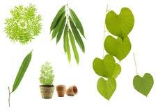 Coleção verde da folha Imagem de Stock Royalty Free