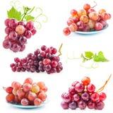 Coleções da uva vermelha foto de stock
