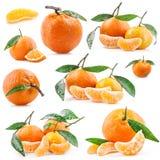 Coleções dos Tangerines Imagens de Stock Royalty Free