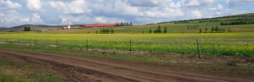 Поле цветков cole Стоковая Фотография