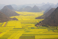 Cole Fields in the morning. The cole fields of Leping is a beauty spot of Yunnan in spring royalty free stock photos