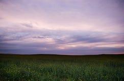 Cole floresce o céu roxo fotografia de stock