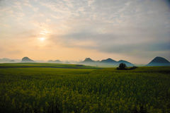 Cole flower field, China Royalty Free Stock Images