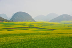 Cole flower field, China Stock Photos