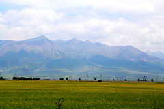 The cole flowers of Qinghai Menyuan bucolic Royalty Free Stock Images