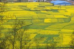 cole kwiatów grota longmen Obrazy Royalty Free