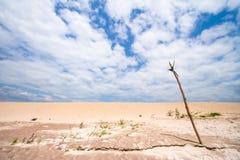 Cole a madeira na areia, céu azul Fotografia de Stock Royalty Free
