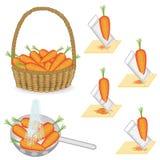 cole??o Cenouras bonitas maduras Os vegetais são recolhidos em uma cesta, lavada em um escorredor com água, terra em um ralador ilustração do vetor