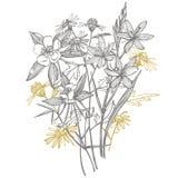 Cole??o de flores e de plantas tiradas m?o botany jogo Flores do vintage Ilustração preto e branco ao estilo de ilustração do vetor
