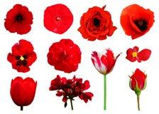Cole??o floral imagens de stock royalty free
