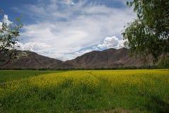 cole pola kwiat Zdjęcia Stock