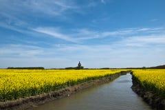 Coleblommor & flod Arkivbild