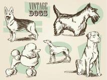 Colección adornada retra clásica del perro ilustración del vector