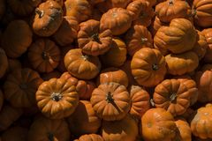 Colección anaranjada brillante de calabazas miniatura Foto de archivo libre de regalías