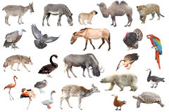 Colección animal aislada en blanco Imagen de archivo