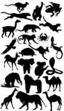 Colección animal de la silueta de África Imagen de archivo libre de regalías