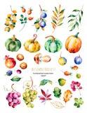 Colección brillante con las hojas de la caída, ramas ilustración del vector