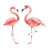 Colección clásica brillante de la naturaleza del flamenco rosado aislada en blanco libre illustration