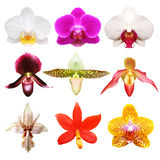 Colección colorida de la orquídea Foto de archivo