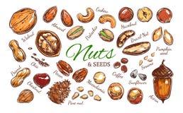 Colección colorida de las nueces y de las semillas ilustración del vector
