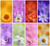 Colección colorida de las tarjetas de las flores Fotos de archivo